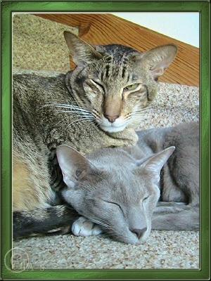 Kalypso & Orpheo genie�en die Sonnenstrahlen auf den warmen Stufen im Garte !